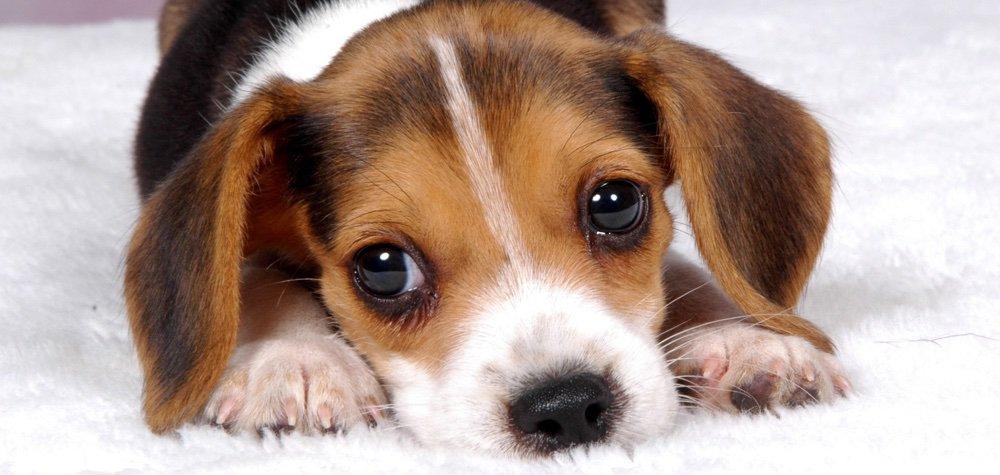 cachorro_atencao_dest